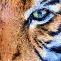 Eye Of The Tiger by JC Findley