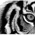 Eye Of The Tiger by Scott Woyak