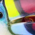 Eye Of The Toucan  by Nadia Sanowar