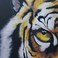 Eye Of Tiger by Jamie Bishop