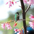 Eye On Spring by Lynn Bauer