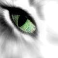Eye On You by Kenneth Krolikowski