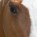 Eye On You Horse by Roberta Byram