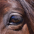 Eye See You by Michelle Wrighton