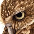 Eyeful by Pat Erickson