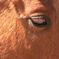 Eyelashes - Horse Close Up by James BO Insogna
