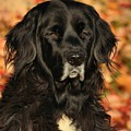 Eyes Of Autumn by Debbie Stahre