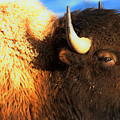 Eyes Of The Bison Spring 2018 by Adam Jewell
