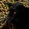 Eyes Of The Panther by David Lee Thompson
