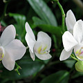 F11 Orchid Flowers by Donald k Hall