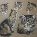 Faa Cat Collage by Val Stokes