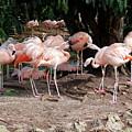 Fabulous Flamingos by Brett Winn