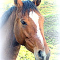 Face The Horse That Is Facing You   by Hilde Widerberg