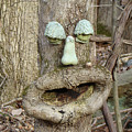 Face In The Woods by Mother Nature