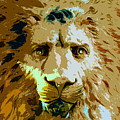 Face Of The Lion by David Lee Thompson
