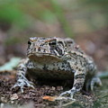 Face To Face With A Fowler Toad  by Neal Eslinger