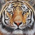 Faces Of The Wild - Amur Tiger by Elena Kolotusha