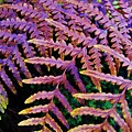 Faded Ferns by CL Redding