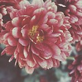 Faded Florals by Brittany Doyle