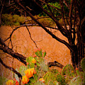 Fading Cactus by Marc Bement