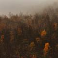 Fading Fall Colors I by Pekka Sammallahti
