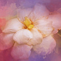 Fading Summer Flower by Jai Johnson