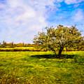 Faerie Tree In Galway Meadow by James Truett