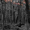 Faint Fall by Dylan Punke