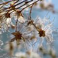Fairy Flowers by Helaine Cummins