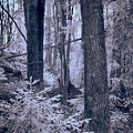 Fairy Forest by Jouko Lehto