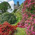 Fairy Tale Garden by Adrian Evans