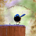Fairy Wren by Elaine Teague