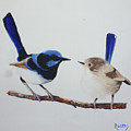 Fairy Wrens - I Love You Too  by Michael Rogers