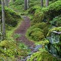 Fairytale Trail by Ludwig Riml