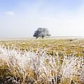 Fairytale Winter In Fingal by Jorgo Photography - Wall Art Gallery