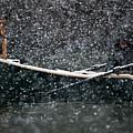 Faith In Snow Ka653 by Yoshiki Nakamura