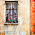 Fake Flowers On Window by Silvia Ganora