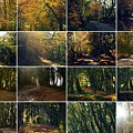 Fall - A Montage by Andy Thompson