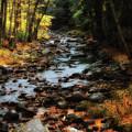 Fall Along Tenant Creek by Michael Hine