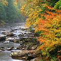 Fall Along The Cranberry River by Thomas R Fletcher