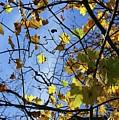 Fall  by Amanda Camarata
