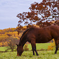 Fall And A Horse by Rima Biswas