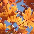 Fall Art Orange Autumn Leaves Blue Sky Baslee Troutman by Baslee Troutman