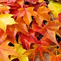 Fall Art Prints Red Orange Yellow Autumn Leaves Baslee Troutman by Baslee Troutman