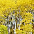 Fall Aspen Meadow by Dori Peers