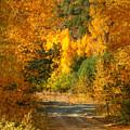 Fall Aspen Trail by Ken Smith