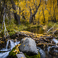 Fall At Mcgee Creek by Cat Connor