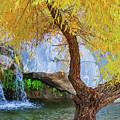 Fall At Murray Falls II by Scott Campbell