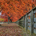 Fall At Riverview Park by Jerry Gammon