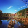 Fall At The Pond by Jason Nicholas